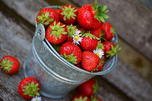 Erdbeeren aus einem der Selbstpflückgärten in Kärnten